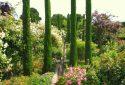 JDP Le jardin de roses (2)