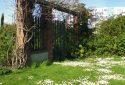JDP Le jardin de roses (7)