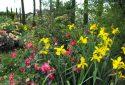JDP Le jardin de roses (8)