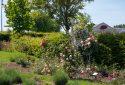 Route de la Rose - Jardin à theme Quies-sur-Bezonde - Crédit photo = IOAproduction - Sébastien Richard (4)