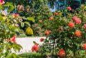 Route de la Rose - Jardin des plantes Orléans - Crédit photo = IOAproduction - Sébastien Richard (21)