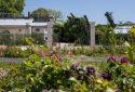 Route de la Rose - Jardin des plantes Orléans - Crédit photo = IOAproduction - Sébastien Richard (44)