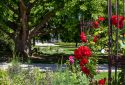 Route de la Rose - Jardin des plantes Orléans - Crédit photo = IOAproduction - Sébastien Richard (7)